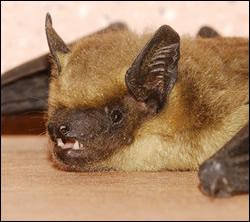 bat control Southlake