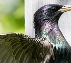 bird control Southlake