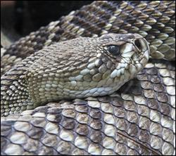 snake removal Southlake