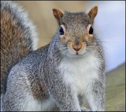 squirrel control Southlake